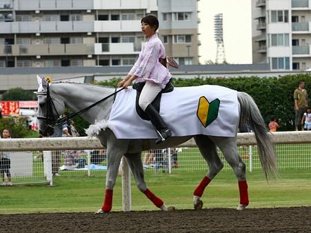 川崎競馬の誘導馬 初心者マークVer 2
