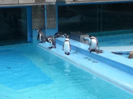 20110827王子動物園(5)