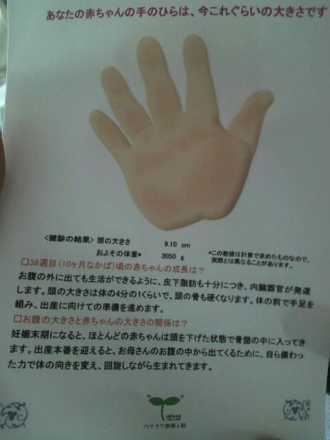 手 の 大き さ 平均