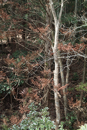 trees03162012dp2-08