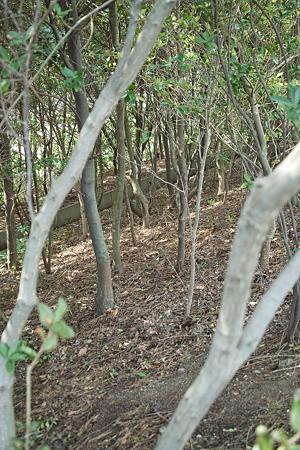 trees04022012dp2-02