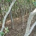 Photos: trees04022012dp2-02