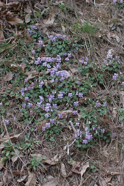 Photos: Flower04082012sd15-03