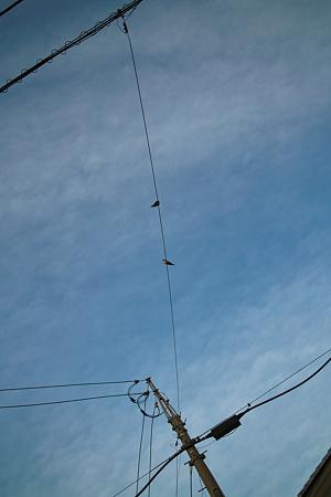 Swallows04122012dp2