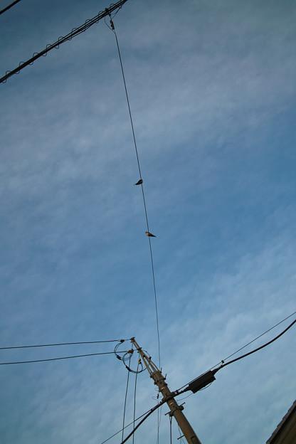 Photos: Swallows04122012dp2