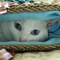 写真: 袋好き♪♪♪