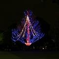 Photos: たまには夜の上野公園3-998c
