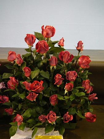 10ガーデニングショー薔薇