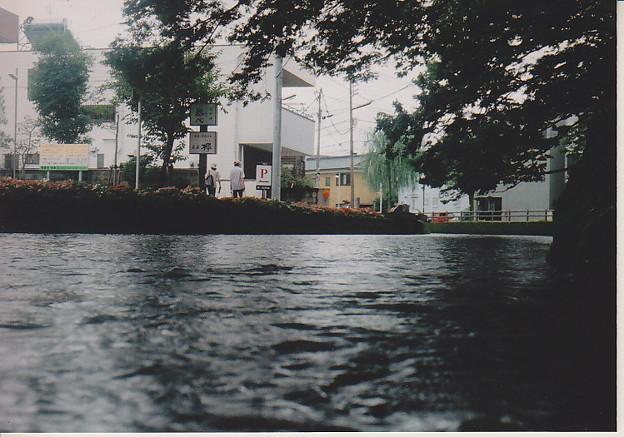 三島市 桜川
