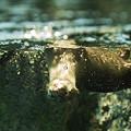 写真: marinepia120609557