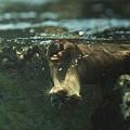 写真: marinepia120609558