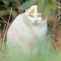 Photos: yamanao999_cats_079