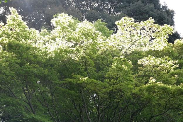 IMG_5464當麻寺・西南院・西南院庭園・新緑