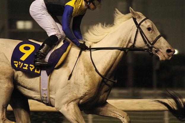 白い馬体に砂をかぶって