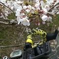 120415 吉野山花見ライド2012 [千早峠(金剛トンネル)-吉野口-水越峠