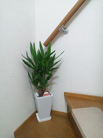 玄関に観葉植物を置いてみた!