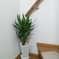 写真: 玄関に観葉植物を置いてみた!