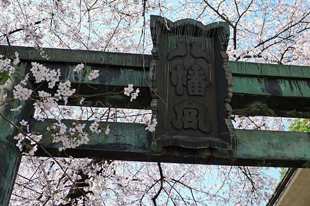 桜だらけの鳥居