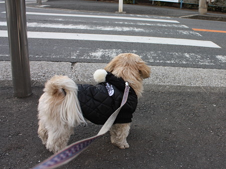 横断歩道待ち1
