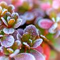 Photos: 霜