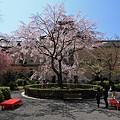 Photos: 京都府庁・旧本館25