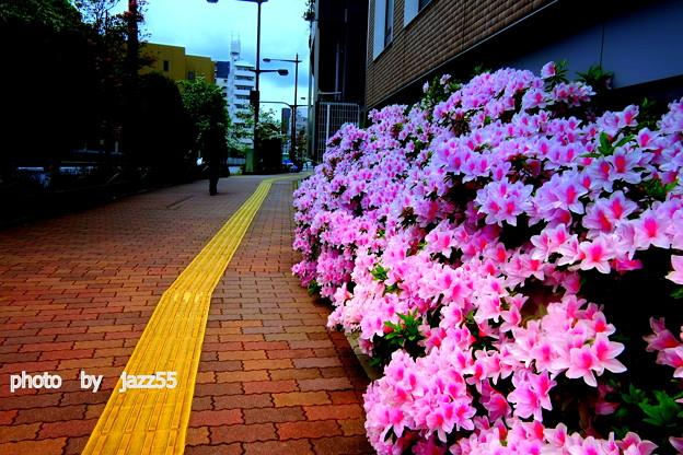 つつじ 咲く 春日通り
