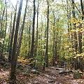 写真: The Sun Through the Woods 10-16-11