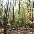 Photos: The Sun Through the Woods 10-16-11