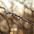 写真: The Branch 1-1-12
