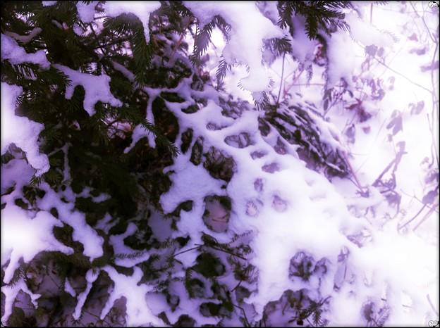 写真: Purple Skeleton