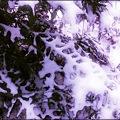 Purple Skeleton