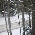 Snowy 1-21-12