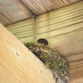 Mommy Sparrow 6-4-11