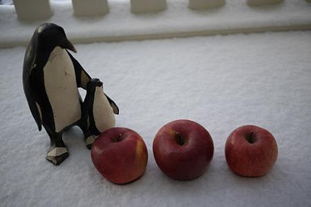 ペンギンと林檎を並べてみた。
