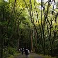 Photos: 高山寺 金堂道_02