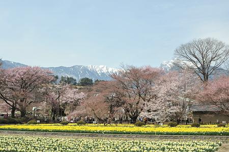 山高神代桜_056