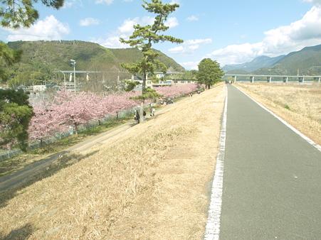 美和桜20120314_5