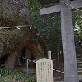 Photos: 巨樹