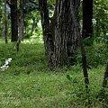 Photos: 二の丸雑木林