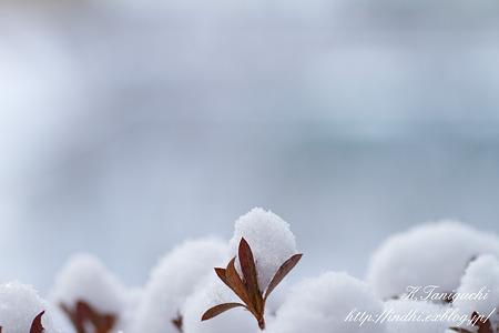 雪 EOS7D SPAF90 272E
