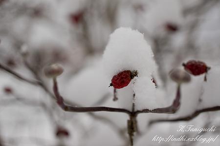 雪景色 NEX-5 E30mm F3.5 Macro