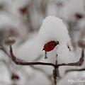 写真: 雪景色 NEX-5 E30mm F3.5 Macro