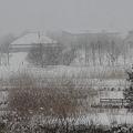 写真: 雪に沈黙する福島潟