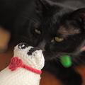 写真: 対面~黒猫編