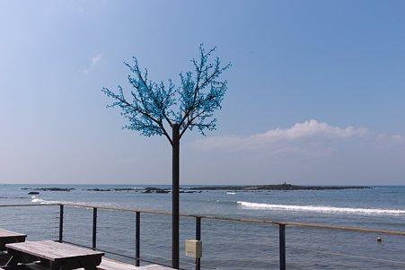 2012.03.24 横須賀 海辺