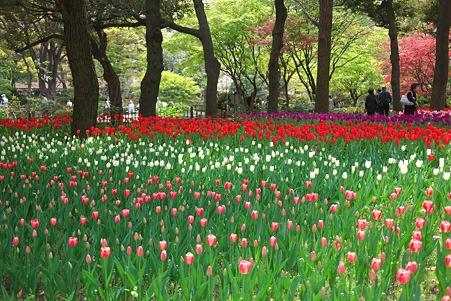 2012.04.19 横浜公園 チューリップ 行き交う