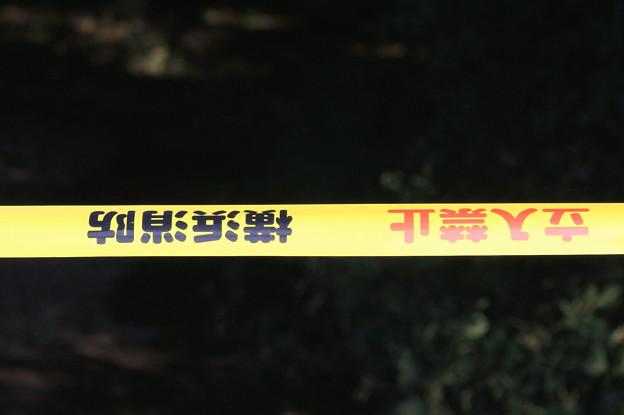 2011.09.22 和泉川 この先倒木ありて