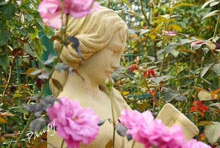 バラ園「薔薇の轍」・・9
