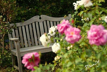 バラ園「薔薇の轍」・・11