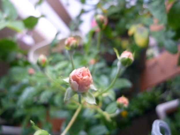 2011.11 garden 083